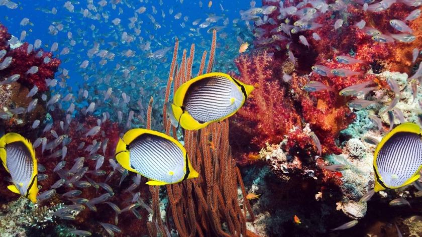 珊瑚礁孕育至少一千萬物種